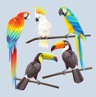 Ara rouge, ara bleu, cacatoès blanc et illustration vectorielle de deux toucans toco vecteur