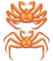 crabe royal d'Alaska. illustration vectorielle. vecteur