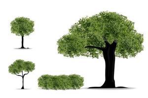 arbre réaliste sur fond blanc. vecteur