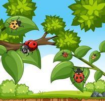 de nombreux insectes coccinelles dans la scène du jardin vecteur
