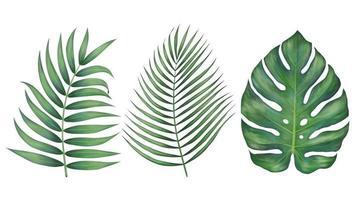 réalistes belles feuilles tropicales vecteur