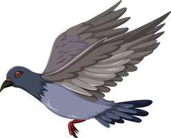 Pigeon oiseau volant dessin animé isolé sur fond blanc vecteur