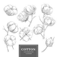 collection de branches de croquis de coton vecteur