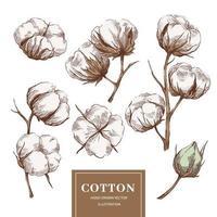 collection de branches de coton vecteur