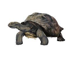 tortue des Galapagos à partir d'une touche d'aquarelle, dessin coloré, réaliste. illustration vectorielle de peintures vecteur
