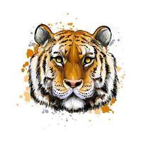 portrait de tête de tigre à partir d'une touche d'aquarelle, dessin coloré, réaliste. illustration vectorielle de peintures vecteur
