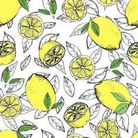 sans soudure de croquis d'agrumes. tranche, morceaux coupés, lobule, feuilles de plantes. illustration vectorielle isolée sur fond blanc. dessiné à la main.