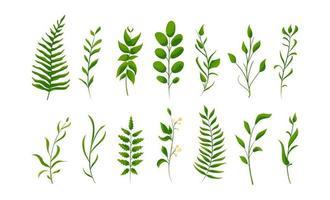 grande collection de jeu de fougère forestière verte, vert tropical. feuilles naturelles isolées. poire, abricot, mûrier, noix, prune vecteur