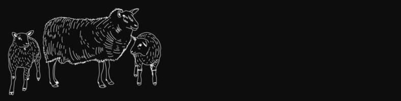 bannière de tableau noir de boucherie avec des moutons vecteur