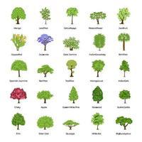 différents types d'arbres vecteur