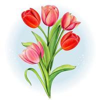 aquarelle bouquet de tulipes rouges et roses vecteur