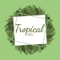 fond de feuilles tropicales conception de vecteur illustration verte