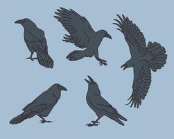 diverses poses de l & # 39; illustration du corbeau