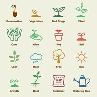 éléments vectoriels de germination