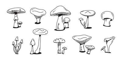 ensemble de doodle coloré aux champignons. croquis plat dessiné main divers champignons. champignon, chanterelle et shiitake.