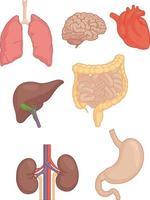 parties du corps humain cerveau poumon coeur foie estomac dessin vectoriel dessin vectoriel