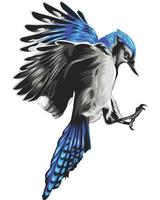oiseau coloré réaliste isolé sur blanc vecteur