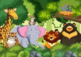animaux sauvages dans la jungle vecteur