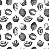 modèle sans couture de fruits litchi dessinés à la main. illustration vectorielle dans le style de croquis botanique vecteur