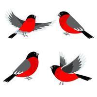 ensemble d'oiseaux bouvreuil. illustration vectorielle pour les cartes de voeux de Noël et du nouvel an, invitations, bannières médiatiques, conception de matériel imprimé. vecteur