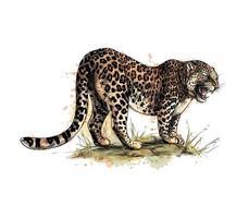 Portrait d'un léopard d'une éclaboussure d'aquarelle, croquis dessiné à la main. illustration vectorielle de peintures vecteur