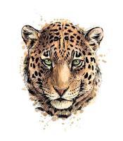 Portrait d'une tête de léopard d'une éclaboussure d'aquarelle, croquis dessiné à la main. illustration vectorielle de peintures vecteur