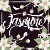 Fond de jasmin vecteur