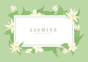 Fond de vecteur de jasmin