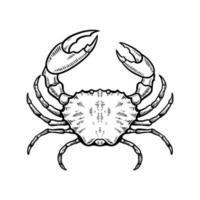 illustration vectorielle de crabe dessinés à la main vecteur