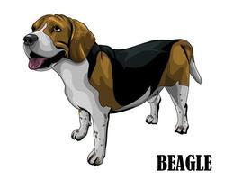 le chien beagle regarde au-dessus de eps 10 vecteur