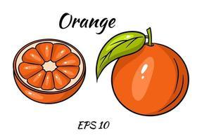 vecteur orange. fruit d'orang tropical frais en style cartoon. tranche d'orange vecteur demi et anneau isolé sur fond blanc.