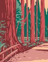 séquoias dans l'avenue des géants entourés par les séquoias de Humboldt vecteur