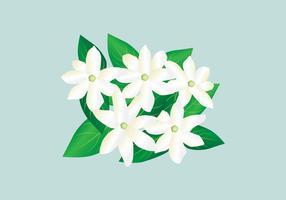Illustration vectorielle de jasmin