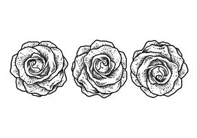 Illustration vectorielle de roses vecteur