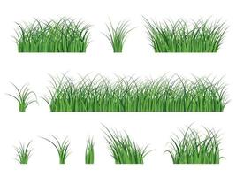 fragment d & # 39; une belle herbe verte isolée sur un blanc, illustration vectorielle vecteur