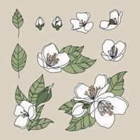 Fleurs de jasmin griffonné vecteur