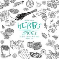 herbes et épices. ensemble d'illustration vectorielle dessinés à la main. vecteur