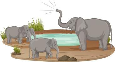 Famille d'éléphants debout à l'étang isolé sur fond blanc vecteur