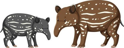 Deux bébé animal sauvage tapir sur fond blanc vecteur