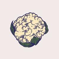croquis d'illustrations vectorielles dessinés à la main de chou-fleur. légumes biologiques pour la nourriture végétarienne, végétalienne ou végétarienne. thème de l'agriculture et du jardin, de la vitamine et de la nutrition. objets de style gravés végétaux vecteur