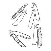 ensemble de haricots et petits pois vecteur