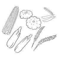 courgette. légumes dessinés à la main de vecteur isolés sur fond blanc. Croquis de vecteur de courgettes sur fond blanc