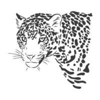 jaguar. illustration de croquis dessinés à la main isolé sur fond blanc. Portrait d & # 39; un animal jaguar, illustration de croquis de vecteur