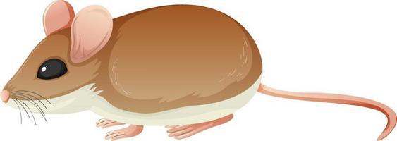 personnage de dessin animé animal de souris sur fond blanc vecteur