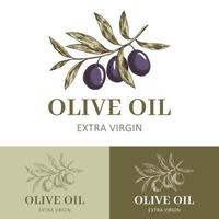étiquette d'huile d'olive avec branche d'olivier vecteur