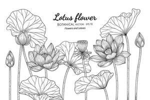 fleur de lotus et feuille illustration botanique dessinée à la main avec dessin au trait sur fond blanc. vecteur