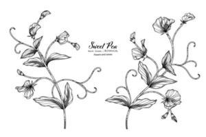 fleur de pois de senteur et feuille illustration botanique dessinée à la main avec dessin au trait. vecteur
