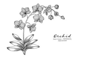 fleur d'orchidée et feuille illustration botanique dessinée à la main avec dessin au trait. vecteur