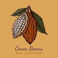 illustration de croquis de style gravé dessiné à la main vintage de fèves de cacao. chocolat en poudre de cacao haricot, branche, noix, graines et feuilles. vecteur pour logo, étiquettes, conception de sites Web, éléments décoratifs et plus encore.