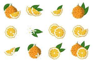 ensemble d'illustrations avec des agrumes exotiques orange amère, des fleurs et des feuilles isolés sur fond blanc. vecteur